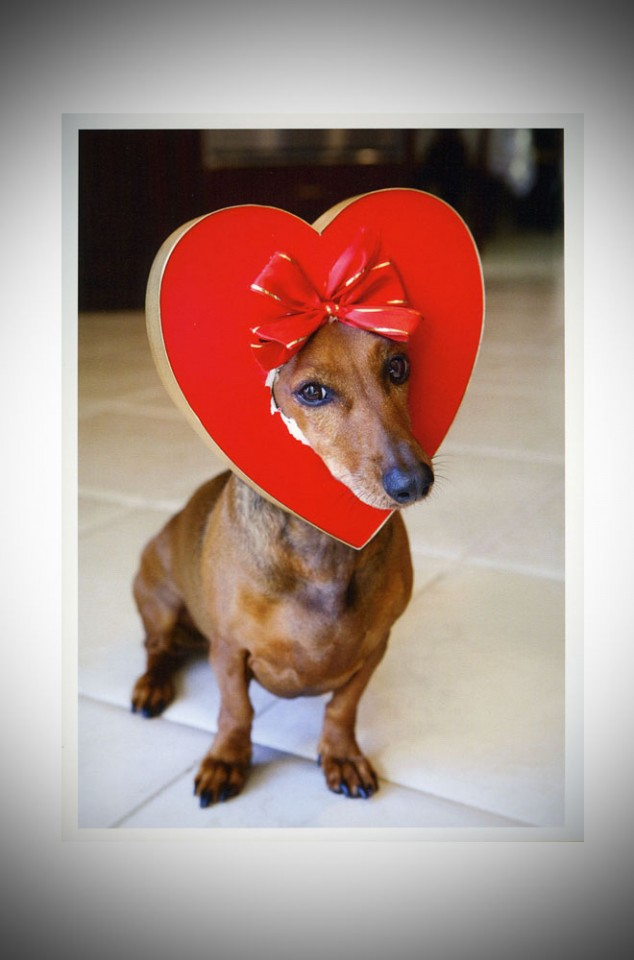 Puppy Dog Heart Valentine's day card