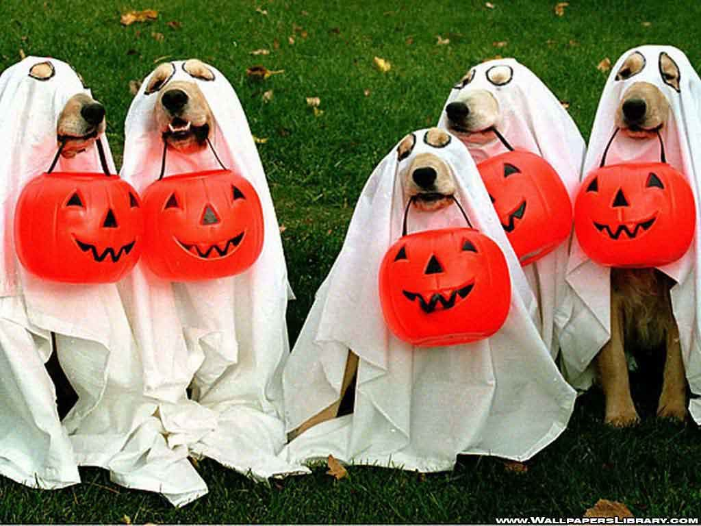 Halloween-Funny-Images-1024x768