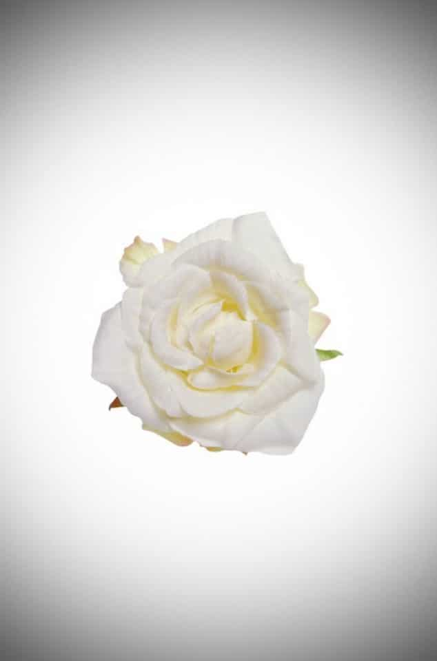 White vintage rose corsage & hair clip that is perfect for pinups