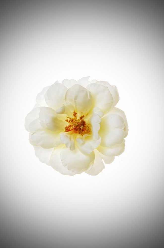 Vintage style pinup Ivory Old Fashioned Rose Hair clip and brooch